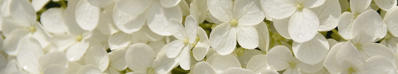Günstige Blumen online bestellen zum Verschenken