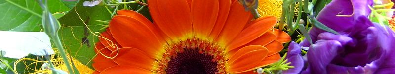BlumenversandVergleich24 + finde einen günstigen Blumenstrauß