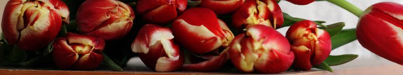 Online Blumen als Geschenk kaufen + günstig