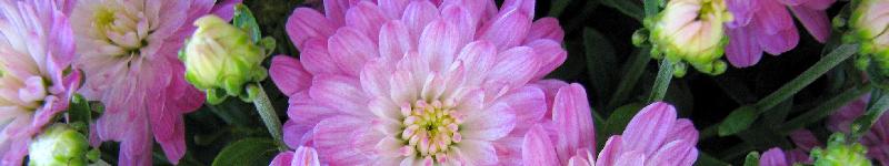Blumenstrauß verschenken + billig online bestellen