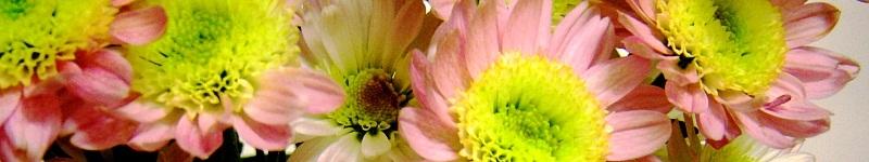 Blumen bestellen online + Pflanzen verschenken
