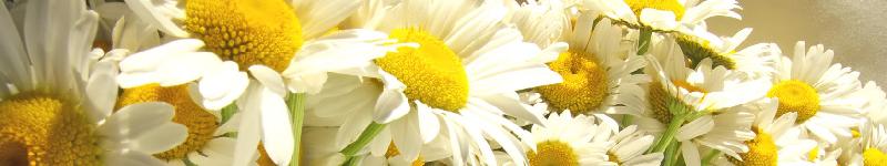 Blumen billig im Internet kaufen