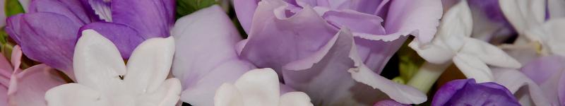 Blumenversender vergleichen und Meinung lesen