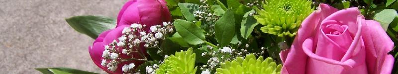 Testberichte + Bewertungen für online Blumenhändler